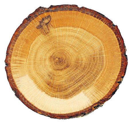 Baumstamm mit Jahrringen