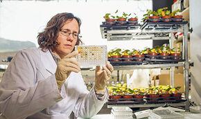 Forschung biologischer Landbau